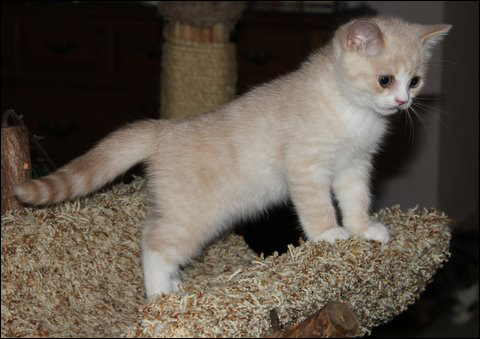 Kittens for Sale in Florida  Cats Kittens and Cat Breeders